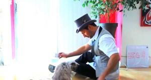 Πως αντιδρούν οι γάτες όταν τους κάνουν μαγικά κόλπα; (Video)