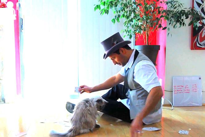 Οι απίθανες αντιδράσεις γατών όταν τους κάνουν μαγικά κόλπα