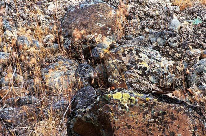 Απίθανες φωτογραφίες ζώων που είναι μετρ του καμουφλάζ (2)