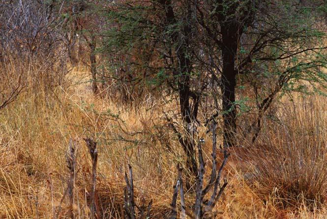 Απίθανες φωτογραφίες ζώων που είναι μετρ του καμουφλάζ (3)