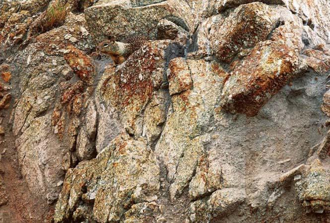 Απίθανες φωτογραφίες ζώων που είναι μετρ του καμουφλάζ (4)