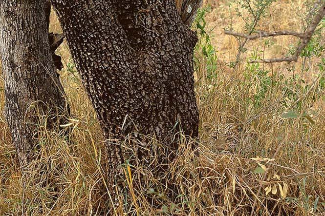 Απίθανες φωτογραφίες ζώων που είναι μετρ του καμουφλάζ (13)