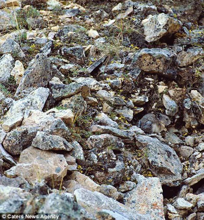 Απίθανες φωτογραφίες ζώων που είναι μετρ του καμουφλάζ (14)