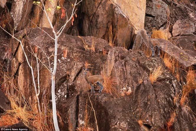 Απίθανες φωτογραφίες ζώων που είναι μετρ του καμουφλάζ (15)