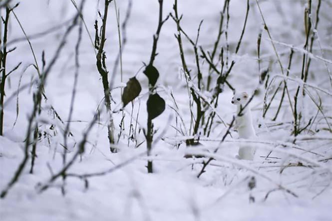 Απίθανες φωτογραφίες ζώων που είναι μετρ του καμουφλάζ (17)