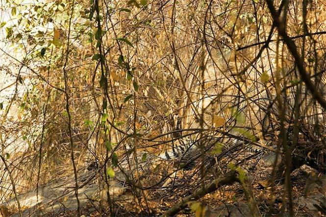 Απίθανες φωτογραφίες ζώων που είναι μετρ του καμουφλάζ (19)