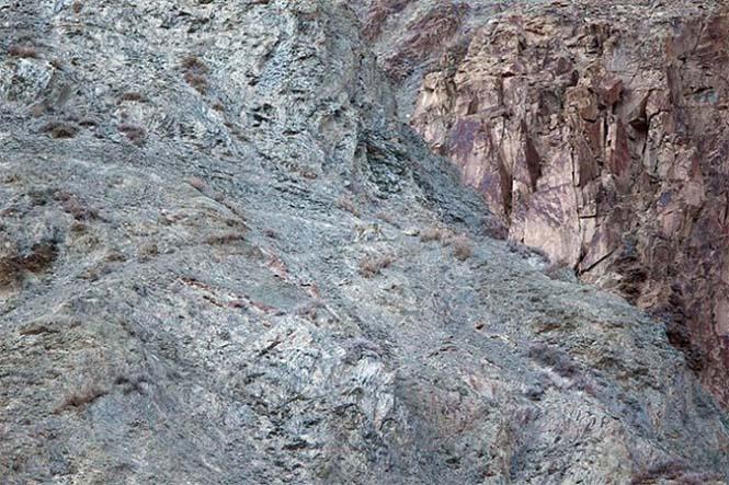 Απίθανες φωτογραφίες ζώων που είναι μετρ του καμουφλάζ (21)