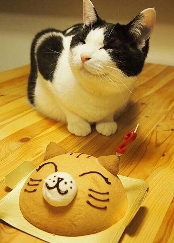 Γάτες που... κάνουν τα δικά τους! (6)