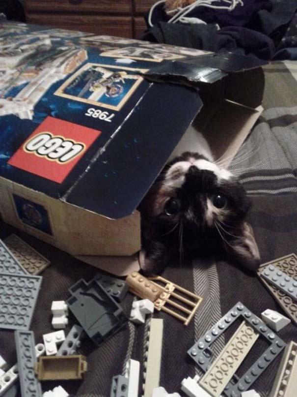 Γάτες που... κάνουν τα δικά τους! (10)