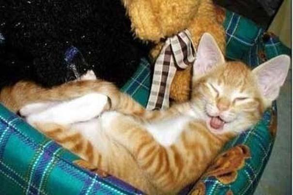 Γάτες που... κάνουν τα δικά τους! (13)