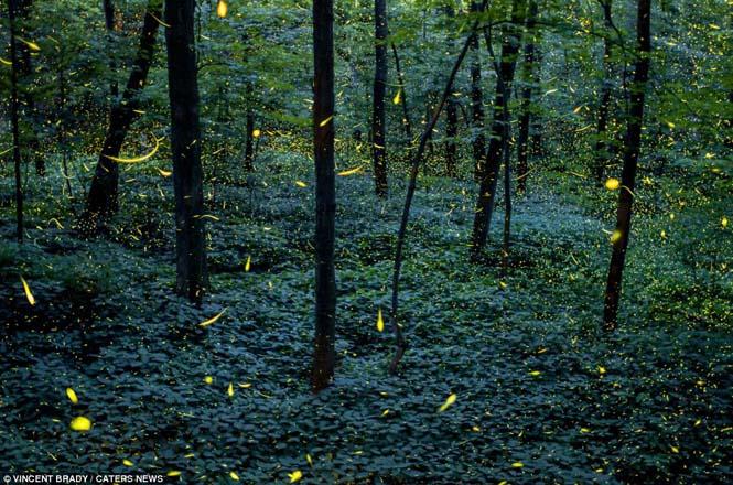 Εκπληκτικές εικόνες με πυγολαμπίδες (5)