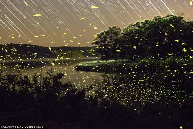 Εκπληκτικές εικόνες με πυγολαμπίδες (7)