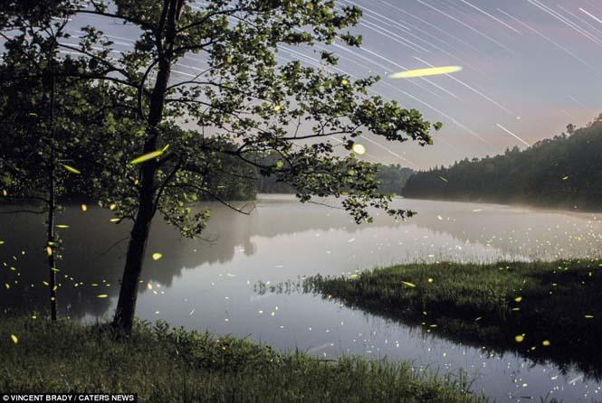 Εκπληκτικές εικόνες με πυγολαμπίδες (10)
