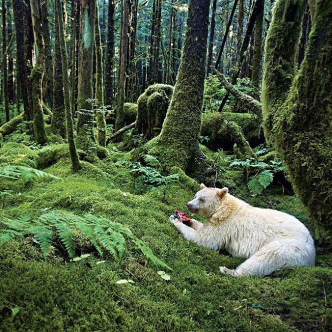 Εκπληκτικές φωτογραφίες του National Geographic στο Instagram (2)