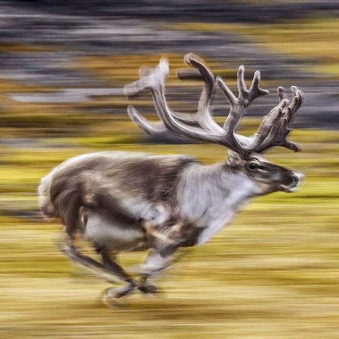 Εκπληκτικές φωτογραφίες του National Geographic στο Instagram (11)