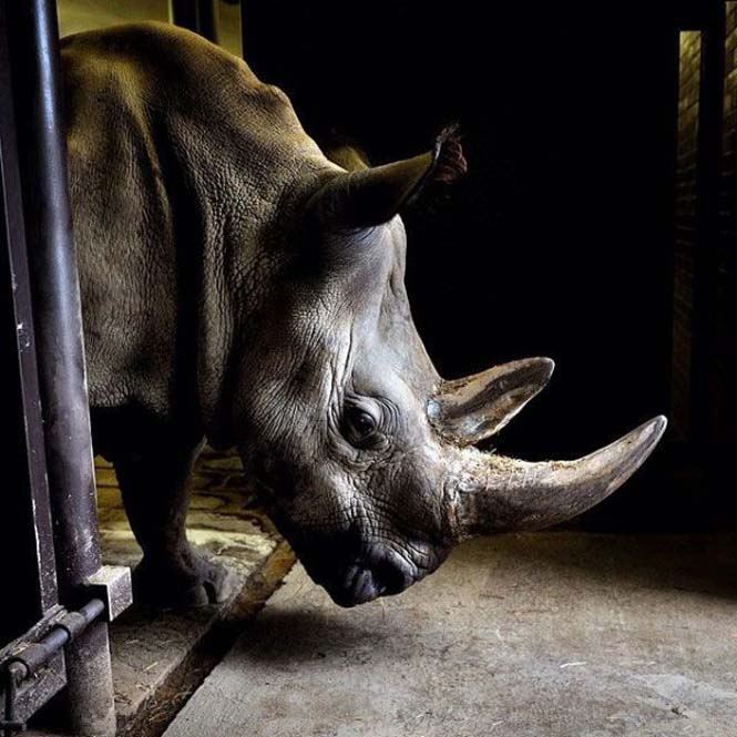 Εκπληκτικές φωτογραφίες του National Geographic στο Instagram (13)