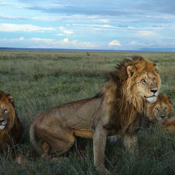 Εκπληκτικές φωτογραφίες του National Geographic στο Instagram (14)