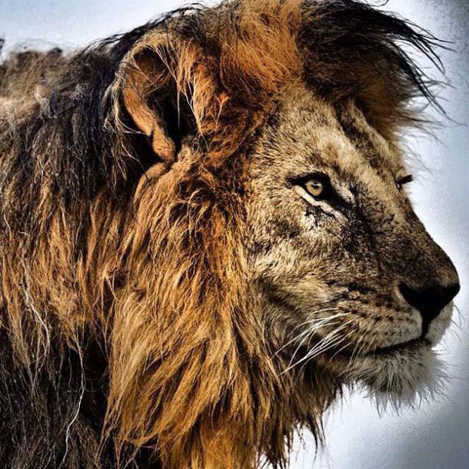 Εκπληκτικές φωτογραφίες του National Geographic στο Instagram (16)