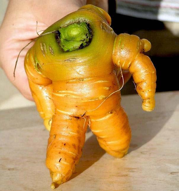 Φρούτα και λαχανικά που μοιάζουν με άλλα πράγματα (2)