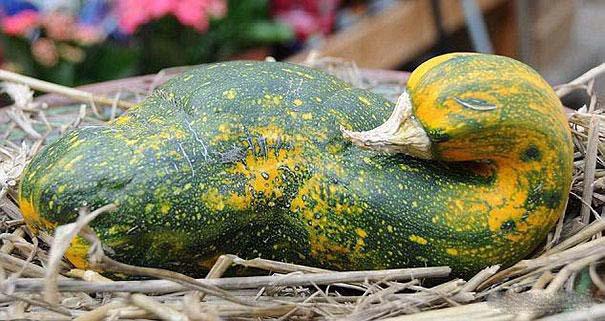 Φρούτα και λαχανικά που μοιάζουν με άλλα πράγματα (6)