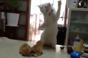 Γάτα μαθαίνει σε γατάκια τα μυστικά της μάχης