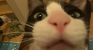 Γάτα τρελαίνεται από χαρά με την επιστροφή του ιδιοκτήτη της (Video)