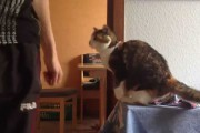 Γάτα υποδέχεται τον ιδιοκτήτη της με τον πιο cool τρόπο
