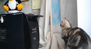 Γάτες εναντίον οικιακών συσκευών (Video)