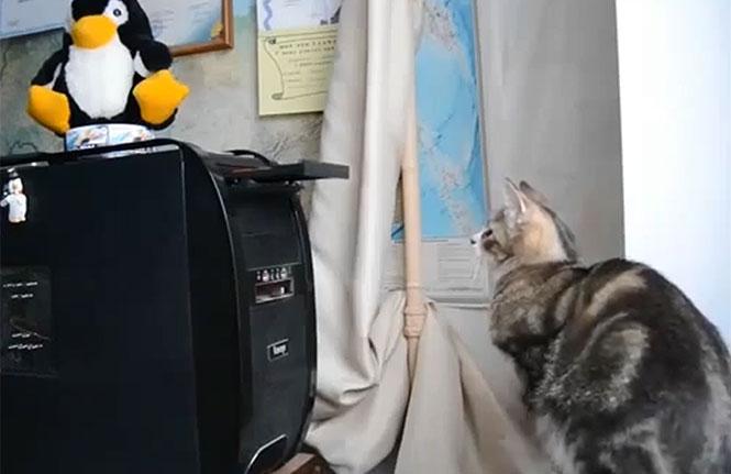 Γάτες εναντίον οικιακών συσκευών