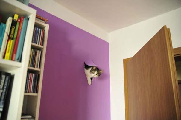 Γάτες με καταστροφικές διαθέσεις (1)