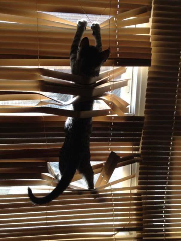 Γάτες με καταστροφικές διαθέσεις (2)