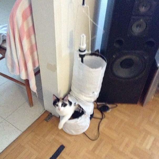 Γάτες με καταστροφικές διαθέσεις (9)