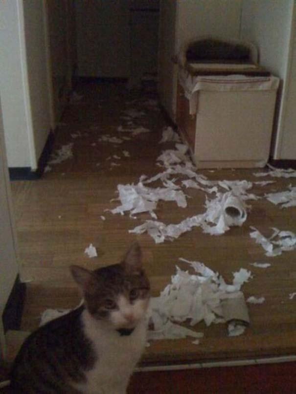 Γάτες με καταστροφικές διαθέσεις (10)