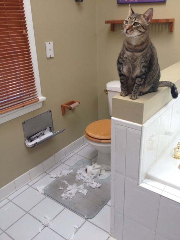 Γάτες με καταστροφικές διαθέσεις (14)