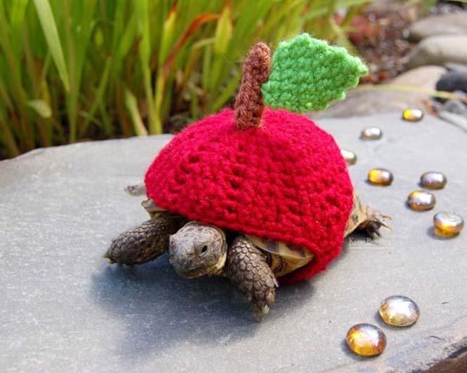 Γυναίκα πλέκει στολές για τις χελώνες της (2)