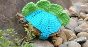 Γυναίκα πλέκει στολές για τις χελώνες της
