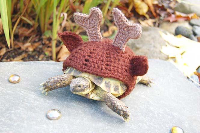 Γυναίκα πλέκει στολές για τις χελώνες της (5)
