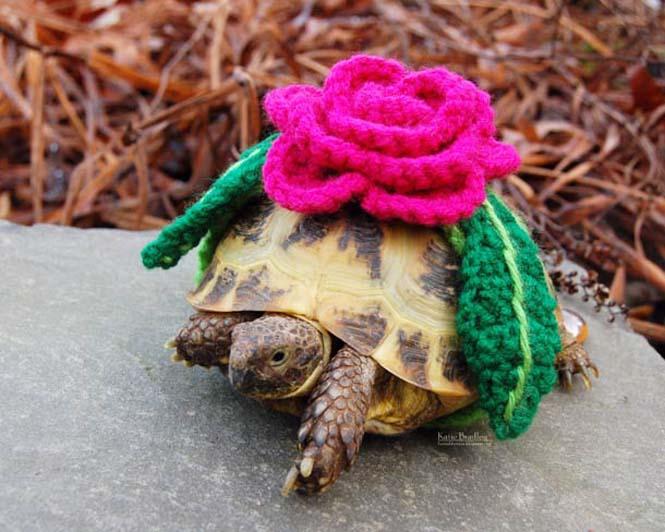 Γυναίκα πλέκει στολές για τις χελώνες της (6)