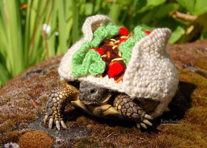 Γυναίκα πλέκει στολές για τις χελώνες της (7)