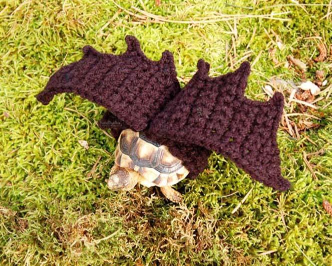 Γυναίκα πλέκει στολές για τις χελώνες της (9)