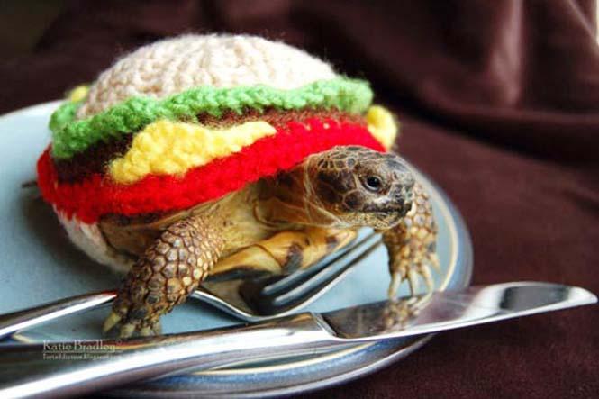 Γυναίκα πλέκει στολές για τις χελώνες της (12)