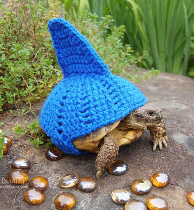 Γυναίκα πλέκει στολές για τις χελώνες της (13)