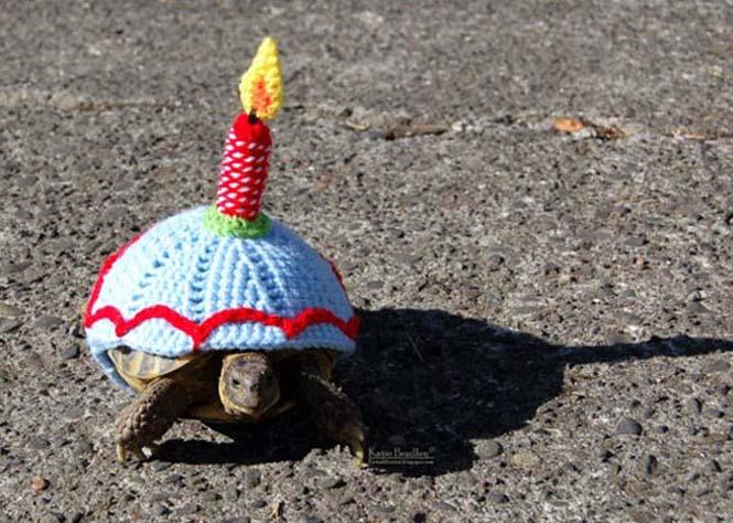 Γυναίκα πλέκει στολές για τις χελώνες της (14)