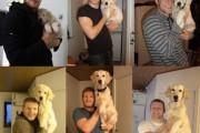 Κατοικίδια πριν και μετά (9)