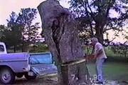 Η κοπή ενός δέντρου κατευθείαν στην καρότσα του φάνηκε καλή ιδέα αρχικά