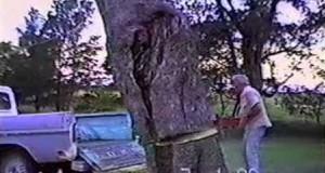 Η κοπή ενός δέντρου κατευθείαν στην καρότσα του φάνηκε καλή ιδέα… (Video)