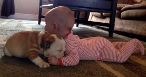 Κουτάβι bulldog και χαριτωμένο μωρό σε ένα βίντεο που τρέλανε το διαδίκτυο