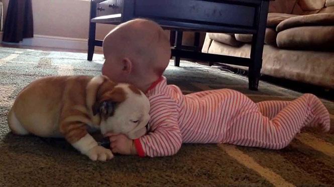Κουτάβι bulldog με μωρό
