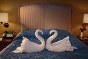 Κύκνοι από πετσέτες με αναπάντεχο φινάλε