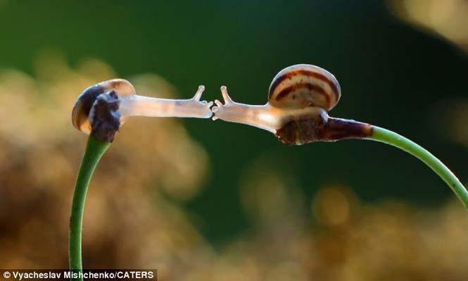 Ο μαγευτικός μικρόκοσμος των σαλιγκαριών (1)